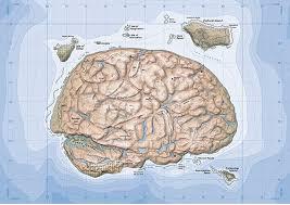 island-brain